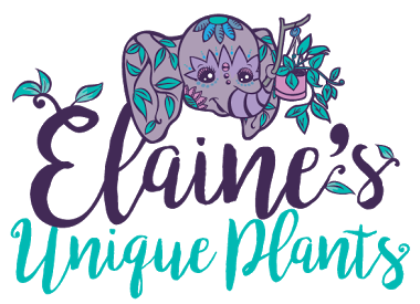 Elaine's Unique Plants & Gifts